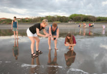 """Turistas norteamericanos grabando """"baby turtles"""" rumbo al mar en Salinas Grandes."""