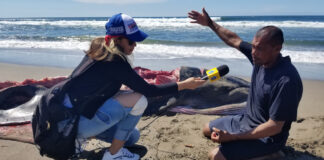 Una balllenita llegó a morir a las playas de la isla Juan Venado en el balneario las Peñitas de Poneloya en León, Nicaragua.